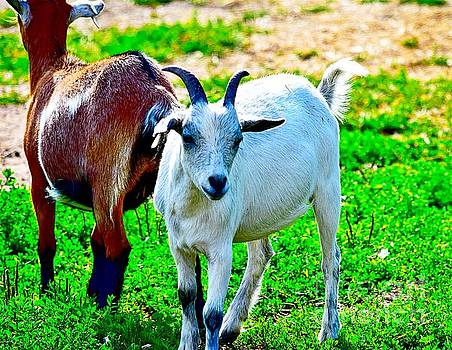 Goat Friends by Becky Kurth