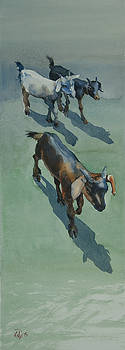 Goat by Helal Uddin