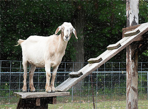 Goat Smile by Susan Stone