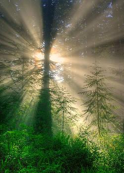 God Rays, Humboldt Redwoods by Tom Kidd