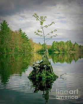 God's Beauty - Nature's Bouquet 6 by Jan Mulherin