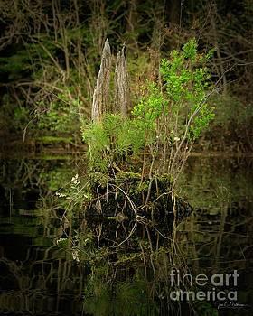 God's Beauty - Nature's Bouquet 8 by Jan Mulherin