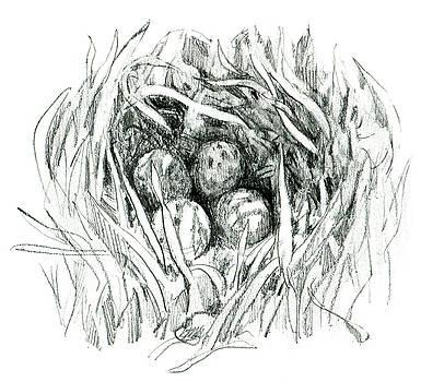 Godwit Nest by Abby McBride