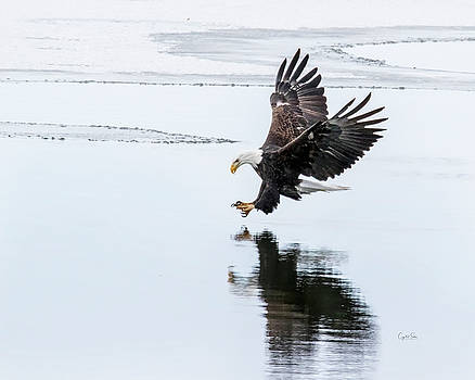 Going for the catch by Crystal Socha