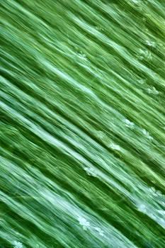 Going Green by Dick Pratt