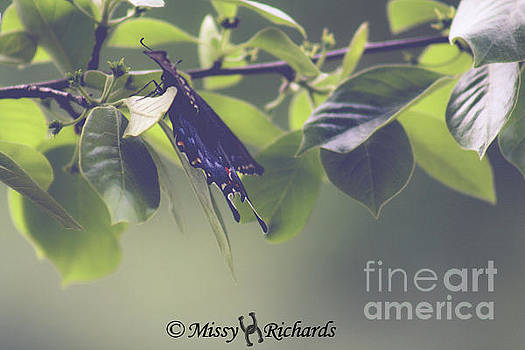 Going Out On A Limb by Missy Richards
