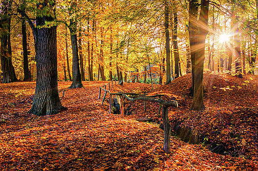 Going to the Autumn sun along the fence by Dmytro Korol