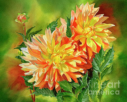 Gold and Orange Dahlias with Background by Sharon Freeman