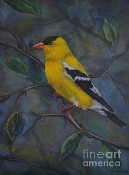 Gold Finch by Jana Baker