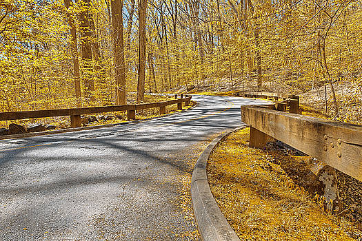 Gold Forest Road by Nicolas Raymond