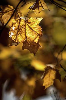 Gold Morning by Jim Johnson