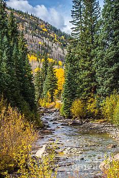 Gold on Henson Creek by Jim McCain
