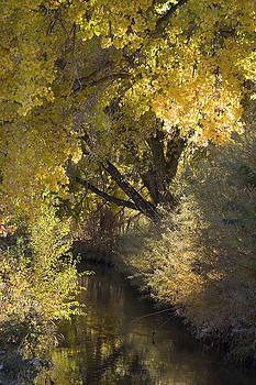 Gold on the Rio Grande by Denice Breaux
