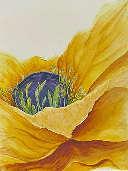 Gold Poppy by Lisa Gibson Art