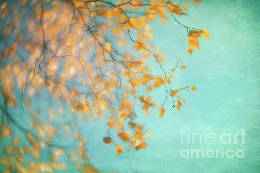 Gold by Priska Wettstein