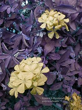 Rizwana A Mundewadi - Gold Purple Fantasia