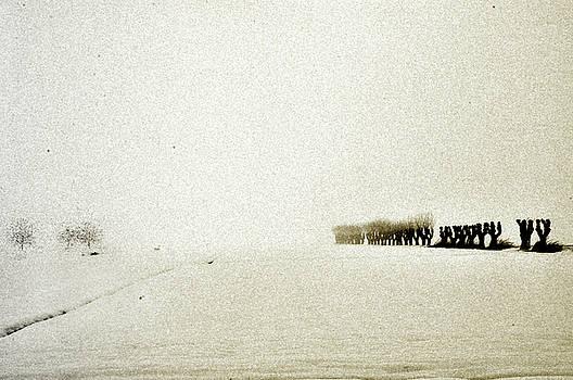 gold Winter by Alberto Catellani