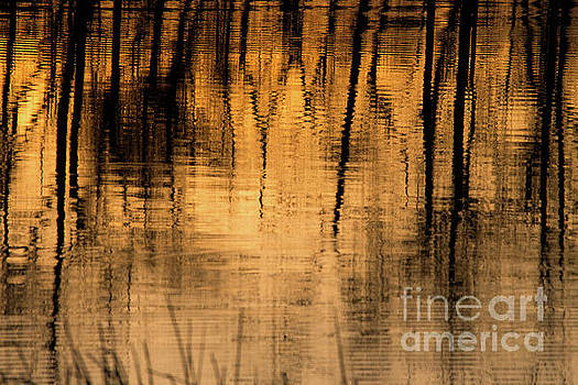 Golden Abstract by Shevin Childers