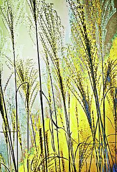 Golden Afternoon  by Margaret Koc