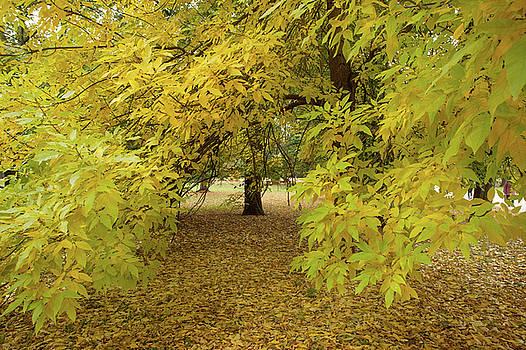 Jenny Rainbow - Golden Ash Tree