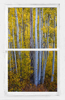 James BO  Insogna - Golden Aspen Forest View Through White Rustic Distressed Window
