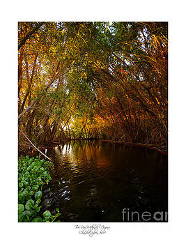 Golden Autumn 1 by Chandra Nyleen
