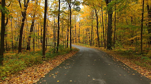 Rosanne Jordan - Golden Autumn Drive