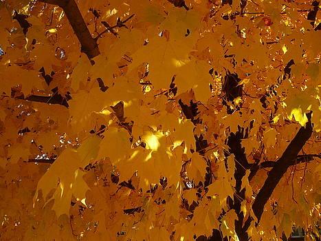 Golden Autumn by Stephen Davis