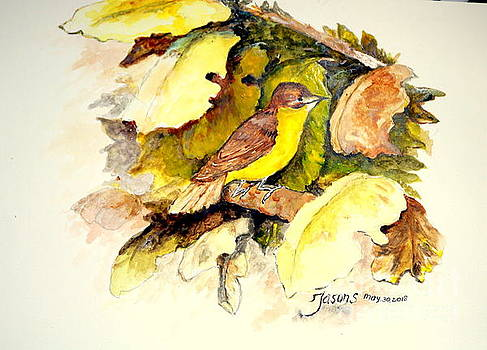 Golden-bellied Flyeater by Jason Sentuf