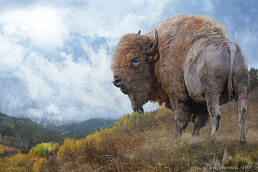 Golden Bison by R christopher Vest