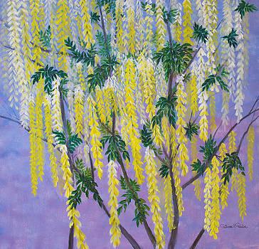 Patricia Beebe - Golden Chain Tree