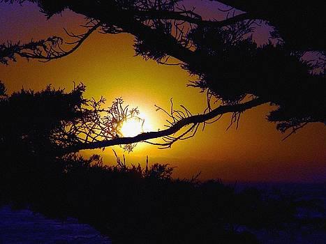 Golden Coastal Sunset by Lorrie Morrison