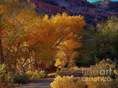 Golden Cottonwoods by Annie Gibbons