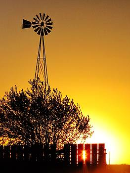 Golden Country Evening by Lori Frisch