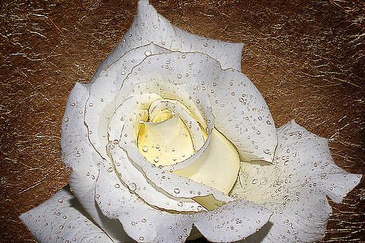 Golden Dew by Phyllis Denton