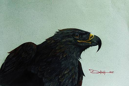 Golden Eagle- head study by Dana Newman