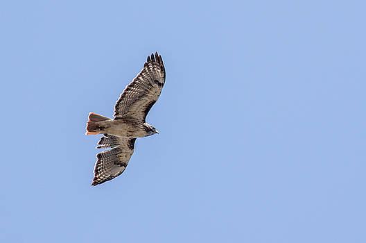 Ross G Strachan - Golden Eagle