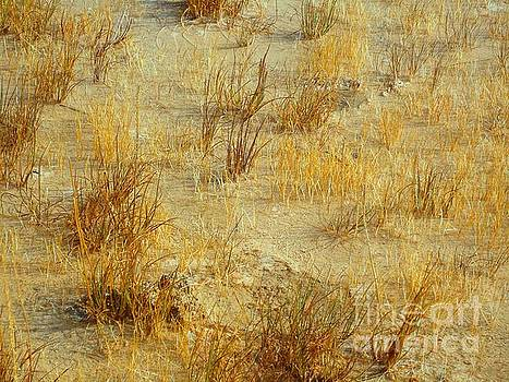 Golden Earthscape by Ann Johndro-Collins