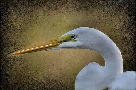 Golden Egret  by Eagle Finegan