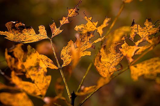 Golden Fall by Bob Mintie