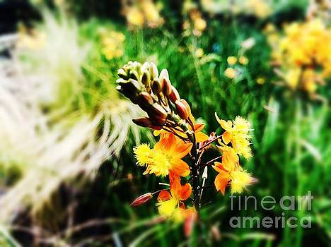 Golden Feather Flowers by JB Thomas