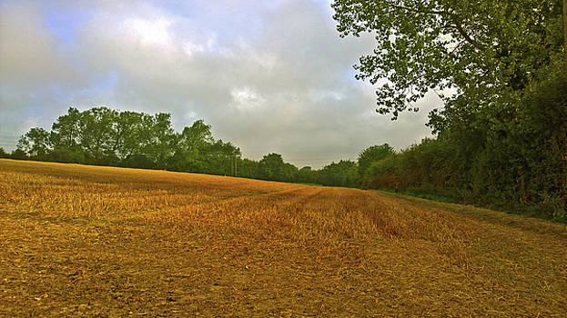 Golden Field by Anne Kotan