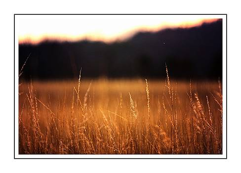 Golden Fields 1 by Scott Fracasso