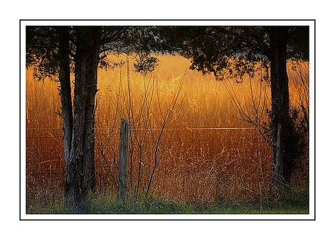 Golden Fields 4 by Scott Fracasso