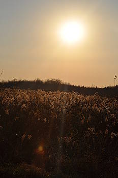 Golden Fields  by Mallory Jarosz
