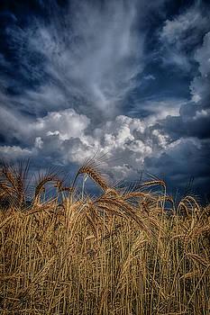 Golden fields by Plamen Petkov