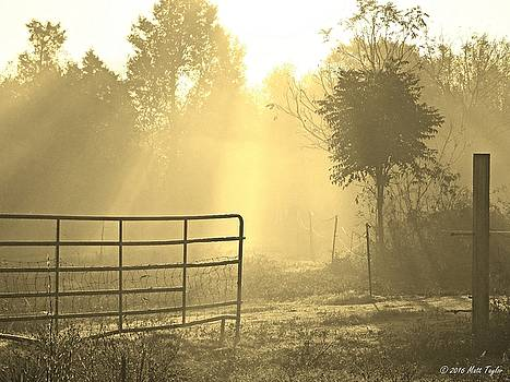 Golden Foggy Morning On The Farm by Matt Taylor