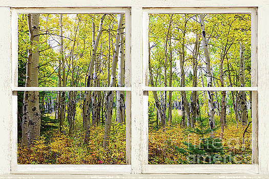 Golden Forest Rustic White Window View by James BO Insogna