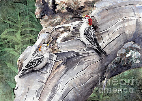 Golden-fronted Woodpeckers by Steve Hamlin