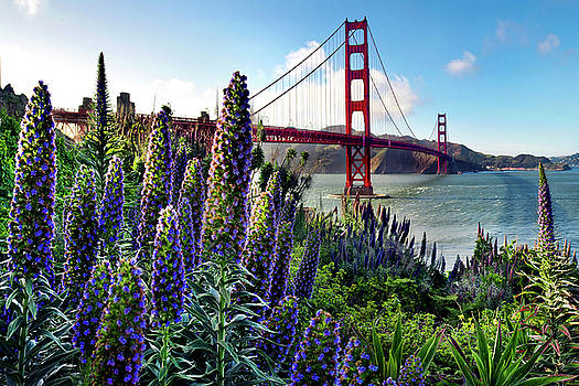 Golden Gate Flowers by Sean Davey
